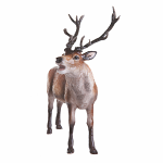 Beswick - Red Stag