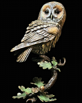 Bronze Hand Painted Tawny Owl in Presentation Box Limited Edition