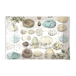 Michel Design Works - Nest & Eggs Rectangular Glass Soap Dish