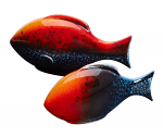 Poole Pottery Flare Fish Set of 2 Gift Boxed