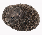 Frith Sculpture - Zippo - Baby Hedgehog Asleep