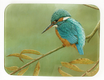 Robert Fuller - Kingfisher on Willow Glass Work Top Saver